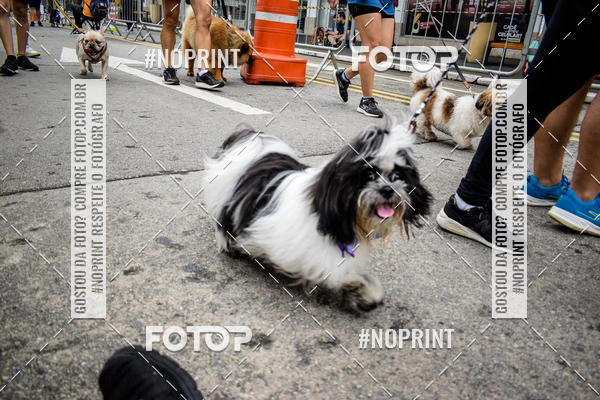 Buy your photos at this event 6ª SP Dog Run – 2019 – shopping SP Market on Fotop