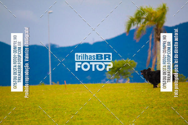 Buy your photos at this event Corrida Bistek 40 anos on Fotop