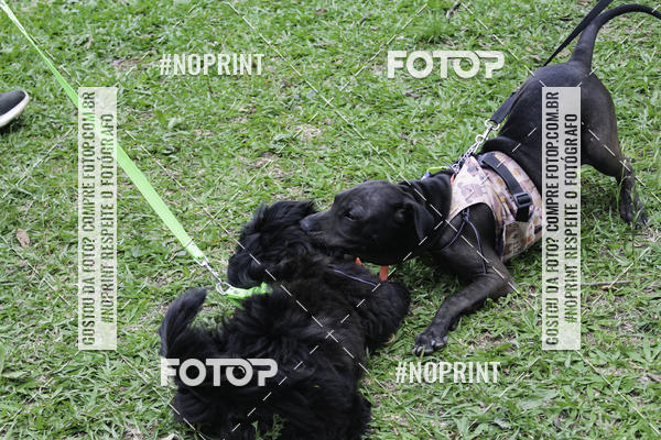 Buy your photos at this event 2º PET RUNNER 2019 on Fotop