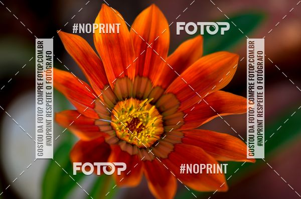 Buy your photos at this event Flores on Fotop
