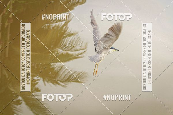 Buy your photos at this event Paraty Trail Run  2020 on Fotop