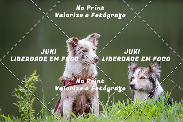 Buy your photos at this event NOSSOCANICROSS, INTERMATAS on Fotop