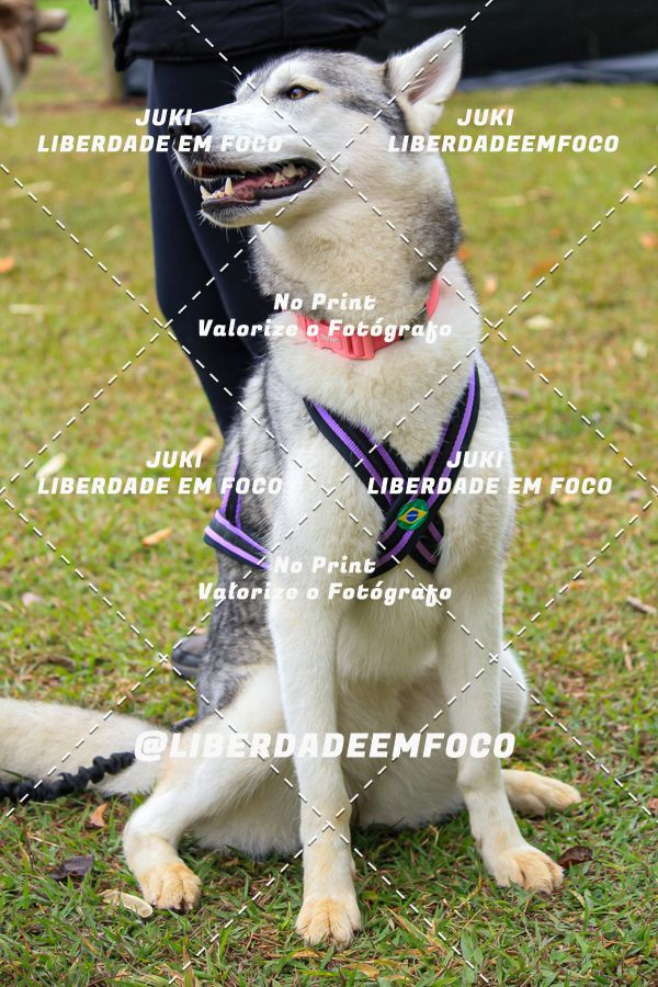 Buy your photos at this event 1° Desafio Canicross Cães Assistentes on Fotop