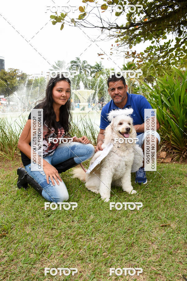 Buy your photos at this event 13ª Cãominhada - Santos on Fotop