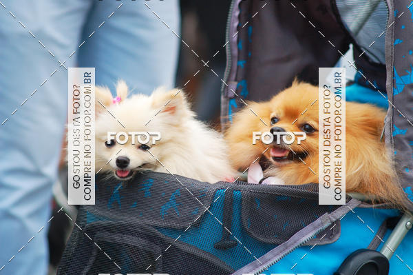 Buy your photos at this event 13ª Cãominhada em Santos on Fotop