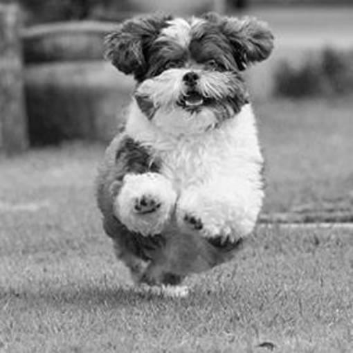 Dog PicturesEn Fotop