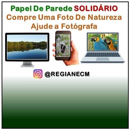 PAPEL DE PAREDE NATUREZA - Foto Solidária on Fotop